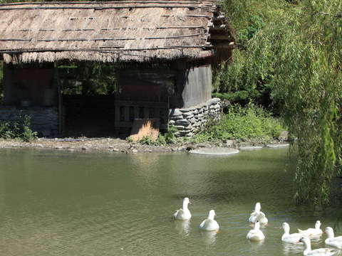 Ducks Eco-Pond