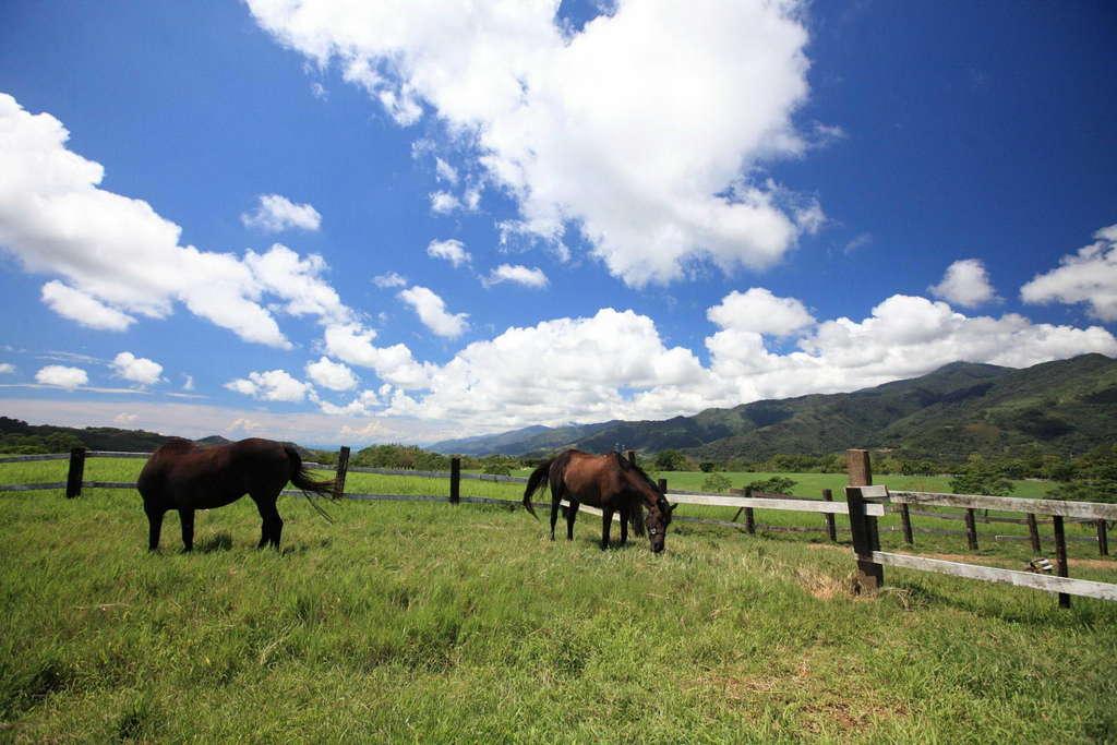 草原上,馬正在悠閒的覓食
