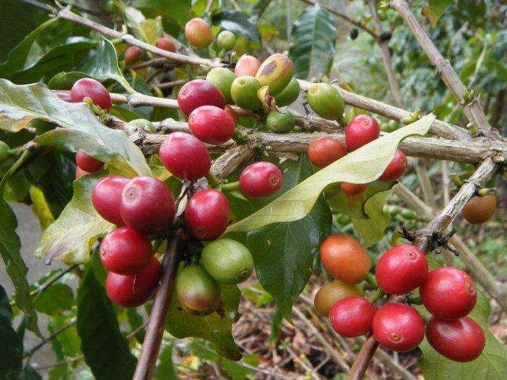 Xin Hua coffee